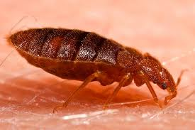 bed bug control palm beach gardens fl