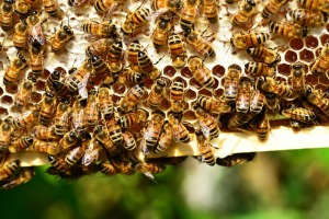 bee control palm beach gardens fl