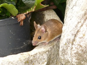 mice control palm beach gardens fl