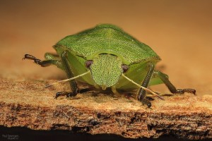 stink bug control palm beach gardens fl